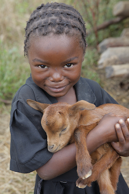 5-year old Lilian Chali holds a goat in the Willie Mulenga village, Zambia.